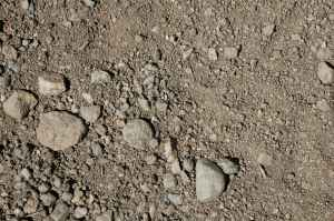 Raccoon Track Unshaded