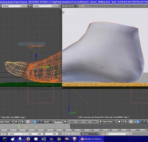 Cut-sway view of 3D foot model